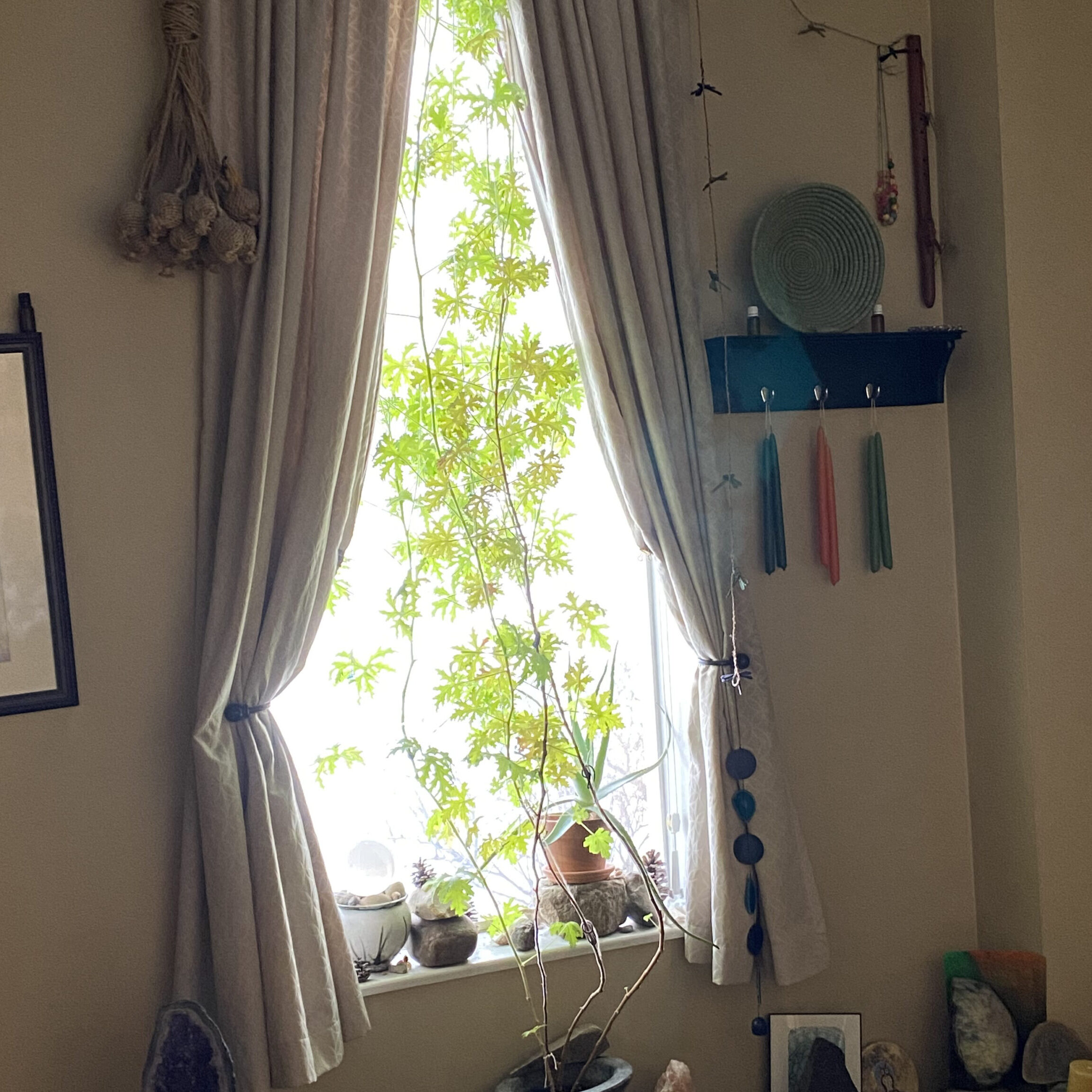 window-performatyourbest